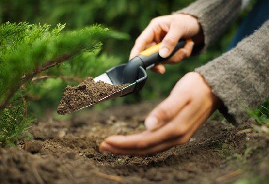 Nové rastlinky si zaslúžia na začiatok to najlepšie