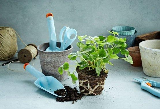 Oživte svoju záhradu ďalšími farbami