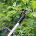 Nožnice Light™ záhradné univerzálne ľahké UP69